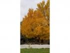 1. An augusta treeweb.jpg