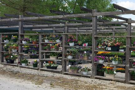 Tammy S Flower Garden Opens Second Location In Defiance