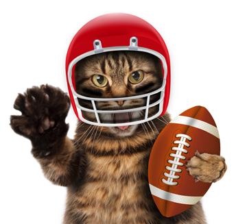 cat football.jpg