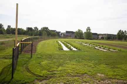 SCC Gardens web 50197098332_e5e03fa7b1_k.jpg