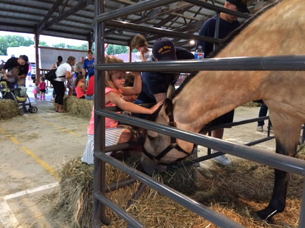 13. Horse webIMG_4044.jpg
