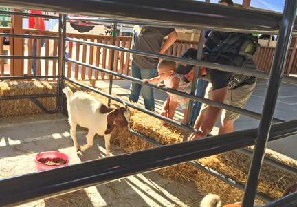 1. goat web IMG_8393.jpg