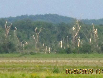 10. Levi trees web2IMG_3833.jpg