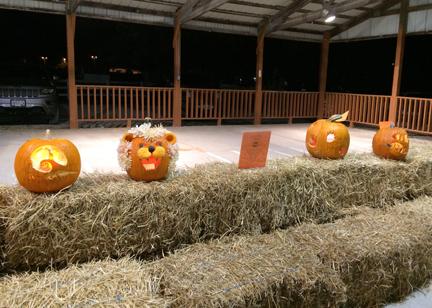 1. pumpkins web  IMG_1850.jpg